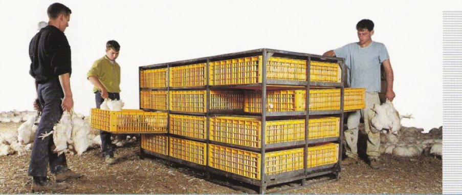 Ручной отлов птицы в ящики